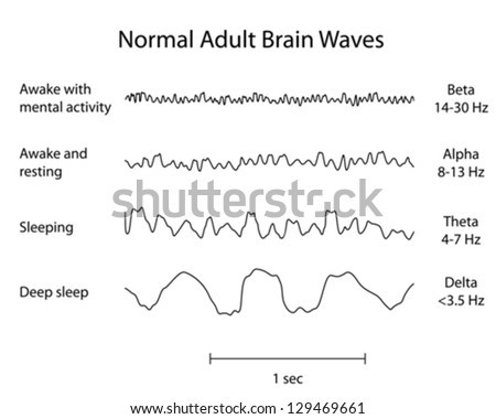 Normal Brain Waves EEG - stock vector