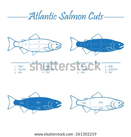 Norwegian Atlantic salmon cutting diagram illustration, blue on white - stock vector