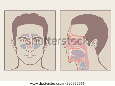 nose, throat anatomy, human mouth, respiratory system - stock vector