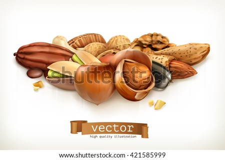 Nuts, vector illustration isolated on white - stock vector
