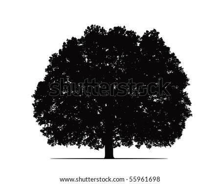 oak silhouette vector - stock vector