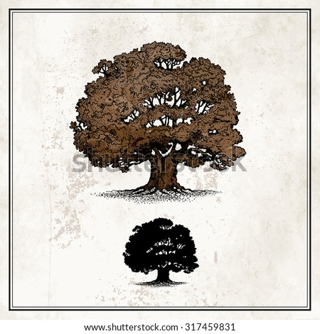 Oak tree - stock vector