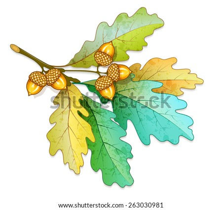 Oak tree branch with acorns and dry leaves. Eps10 vector illustration. Isolated on white background - stock vector
