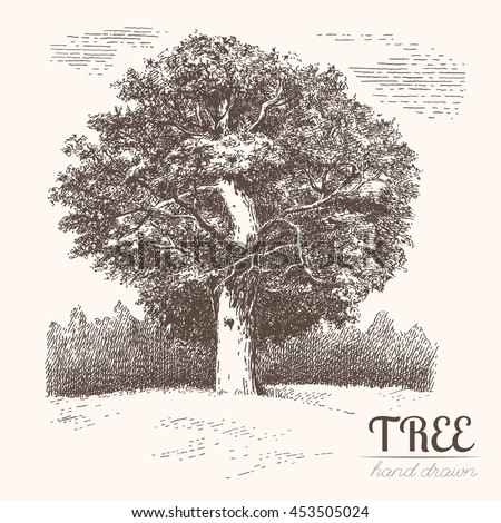 Oak tree hand drawn vintage engraved stock vector 453505024 oak tree hand drawn vintage engraved illustration of trees and landscape altavistaventures Image collections