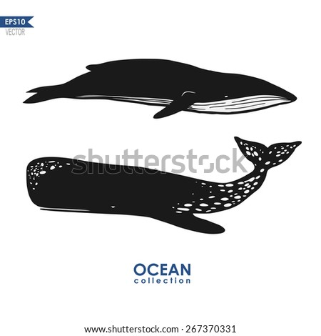 ocean collection, cachalot and big blue whale isolated on white, black and white vector design - stock vector