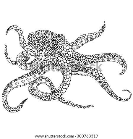 Octopus illustration - (Octopus vulgaris) isolated on white background - stock vector