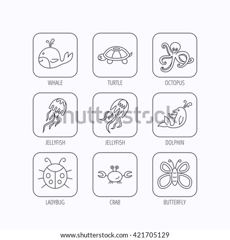 Octopus, turtle and dolphin icons. Jellyfish, whale and ladybug linear signs. Crab, butterfly flat line icons. Flat linear icons in squares on white background. Vector - stock vector