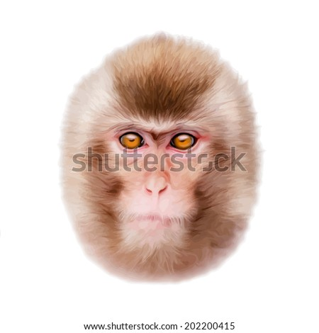 japanese macaque drawing. oil painting style portrait of a young japanese macaque or snow monkey. animal mask, drawing