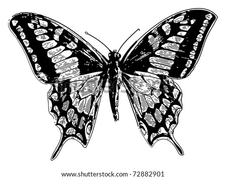 Old engraved illustration of a old world swallowtail or papilio machaon, isolated on white. Live traced. From the magazine Le Magasin Pittoresque, Paris, 1845. - stock vector
