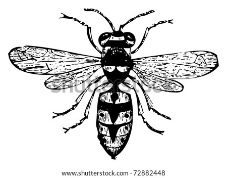 Intro besides Pest Facts Solutions besides Emmet additionally Wasps02 as well Stock Vector Postcard Design With Funny Bees Smiling Swirls And Place For Text Square Format Can Be Used As A. on paper wasp sting
