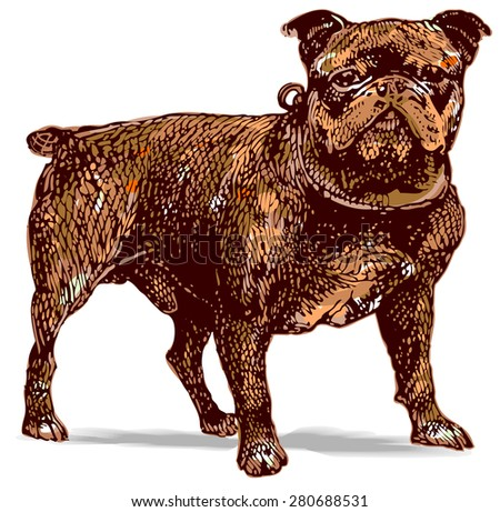 Old fashioned etched style illustration of bulldog - stock vector