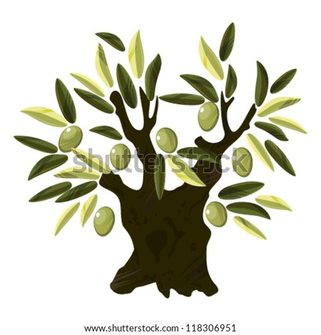 Old olive tree - stock vector