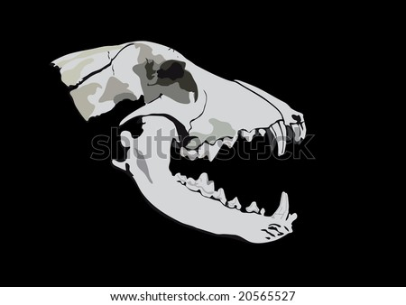 Old skull of a predator - stock vector