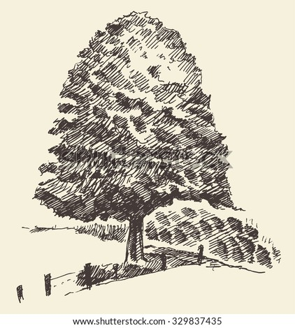 Old tree in the meadow vintage illustration, engraved retro style, hand drawn, sketch