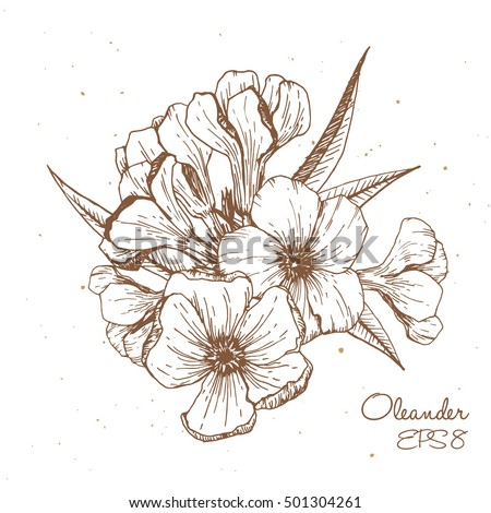 Oleander flower vector graphics engraved style stock vector royalty oleander flower vector graphics engraved style illustration sketch drawingpostcard floral bouquet mightylinksfo