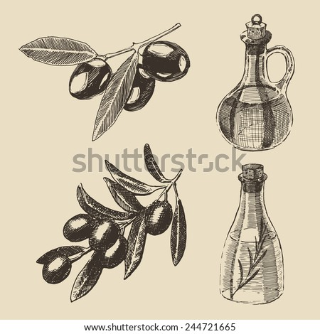 Olive branch and olive bottle set hand drawn vector illustration, engraving - stock vector