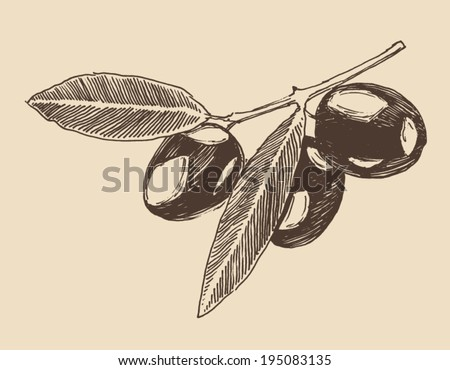 olive branch (olive tree branches) vintage illustration, engraved retro style, hand drawn, sketch - stock vector