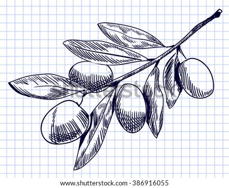 Olive branch sketch on notebook page. Hand drawn olive branch. contour line drawing. VECTOR illustration  - stock vector