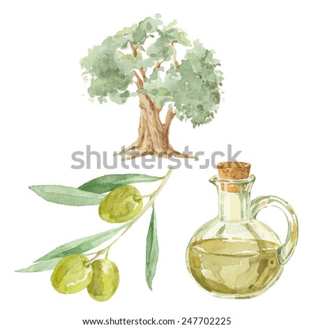 Olive branch,  tree  and a bottle of olive oil drawing by watercolor. Hand drawn isolated vector illustration on a white background. - stock vector