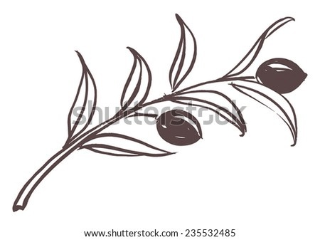 Olive branch with olive leaves and Black ripe olives. Hand drawn with brush & ink, vector illustration, fully adjustable & scalable. - stock vector