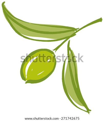 Olive branch with olive leaves and Green ripe olive. Hand drawn with brush & ink, vector illustration, fully adjustable & scalable. - stock vector