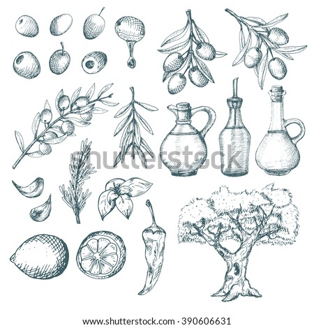 Olive products and supplements sketch. Simple vintage illustrations. - stock vector
