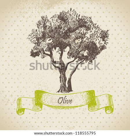 Olive tree. Hand drawn illustration - stock vector