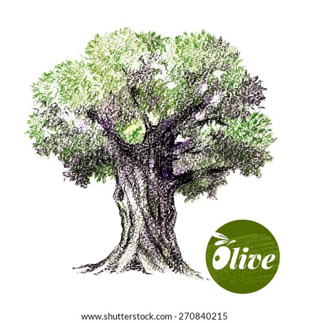 Olive tree vector illustration. Hand drawn  sketch watercolor colored pencils drawing on white background - stock vector