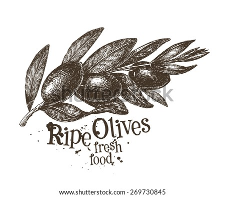 olives vector logo design template. fresh fruit, food or gardening icon. - stock vector