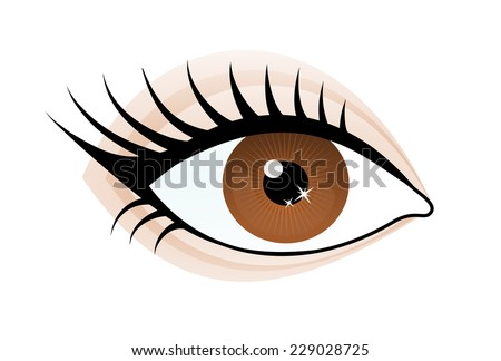 One beautiful brown color caucasian female eye wide open with eyebrow and eyelash. Eye icon, simple drawing graphic design, vector art image illustration, isolated on a white background - stock vector