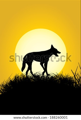 one dingo on a grassy hill in the sunset - stock vector