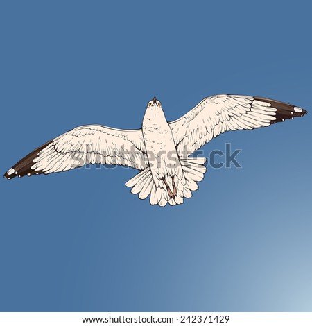 One flying seagull colored vector figure isolated on white background - stock vector