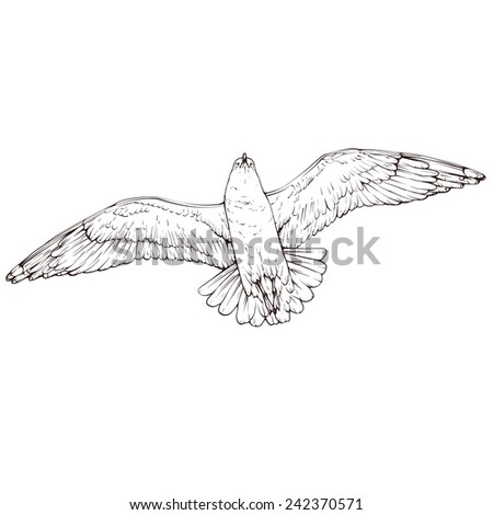 One flying seagull outline vector figure isolated on white background - stock vector