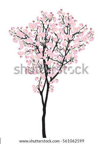 One full bloom pink sakura tree (Cherry blossom) isolated on white.  Pastel flower on black plant bark vector. Spring flora garden icon.