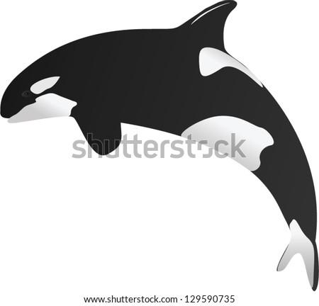 One Illustration of Killer whale - stock vector