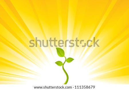 One young plant on a shining yellow background.