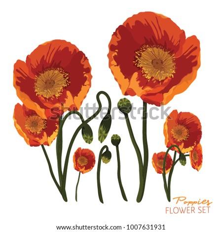 Orange yellow poppies flower arrangement on stock vector 1007631931 orange and yellow poppies flower arrangement on a white background vector illustration mightylinksfo