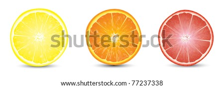 orange, grapefruit and lemon slices - stock vector