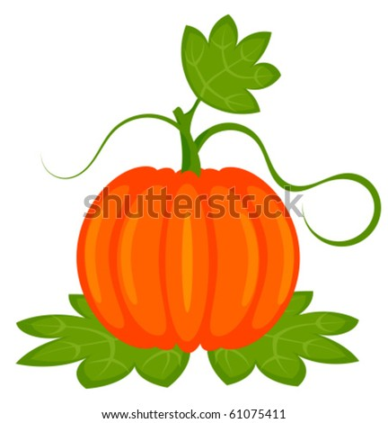 Orange pumpkin with leaves isolated. Vector illustration - stock vector