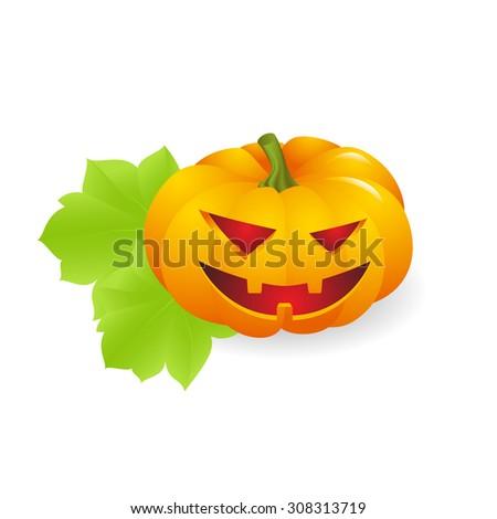 Orange ripe pumpkin on white background. vector illustration - stock vector