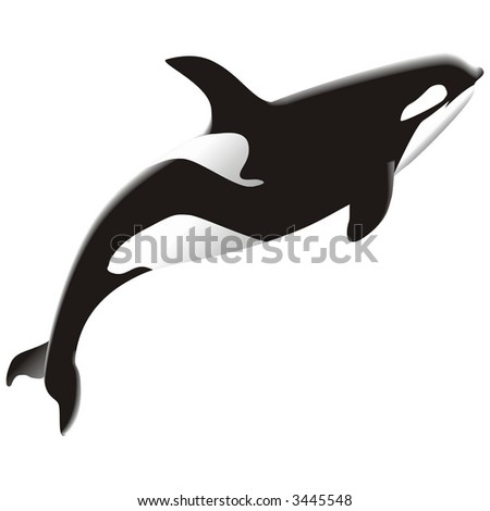 orca - stock vector