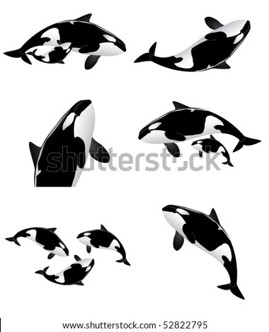 orca collection - stock vector