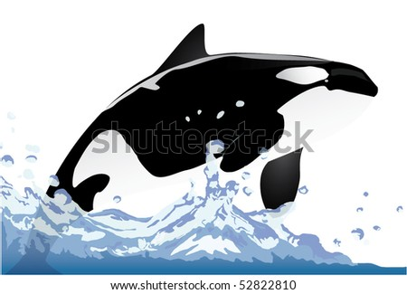 orca swimming in water - stock vector