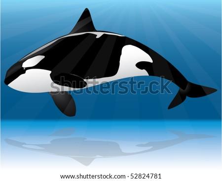 orca whale - stock vector