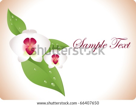 Orchid - stock vector