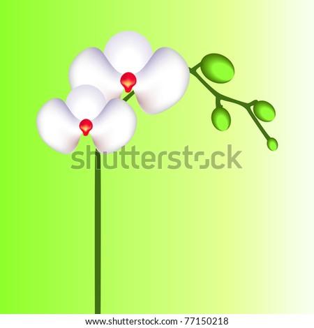 orchid flower vector - stock vector