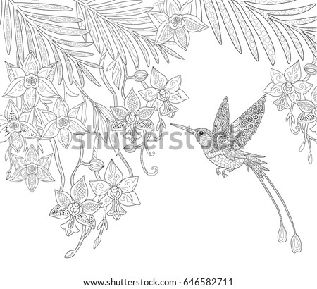 Orchid Flowers Hummingbird Palm