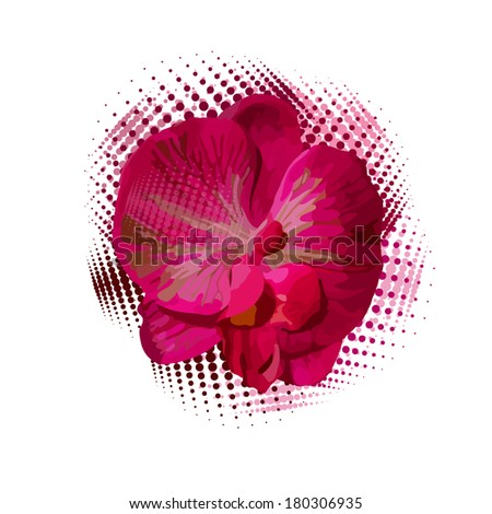 orchid on white background. Vector  - stock vector