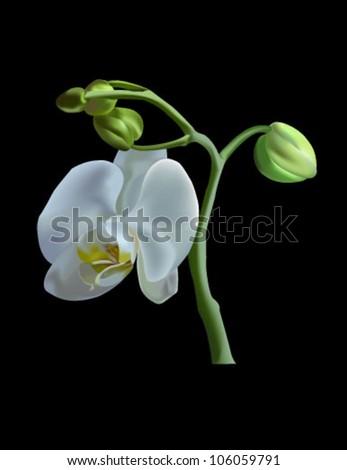 Orchide flower - stock vector