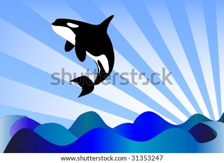 Orcinus orca Killer whale jumping high - stock vector